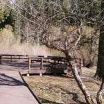 Nature Viewing Platform